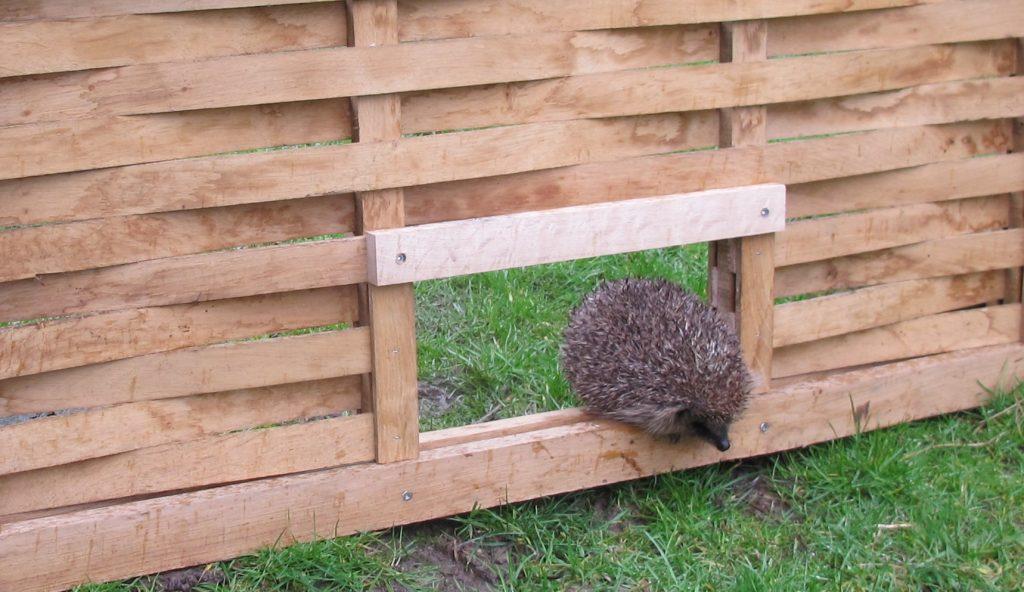 Hedgehog Hole